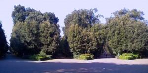 Bosco Reale - long